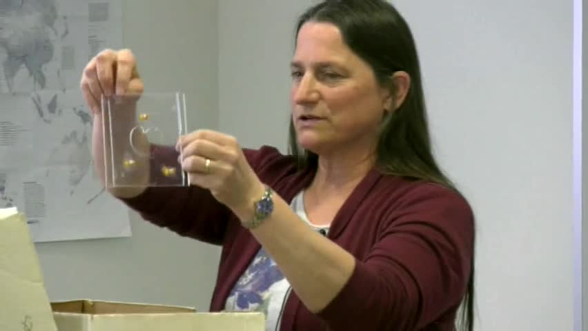 Deb Pharo: How Soap Bubbles can do Calculus